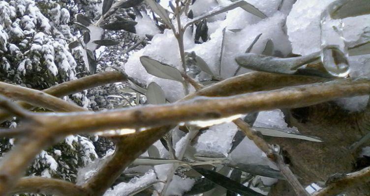 Ένωση Αγρινίου-Παγετός: Πως να προστατέψετε τις καλλιέργειές σας