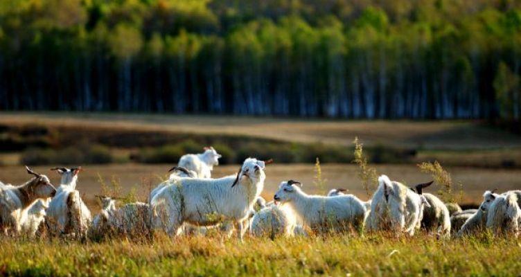 Π.Ε. Αιτ/νίας: Ενημέρωση των κτηνοτρόφων για τα βοσκοτόπια