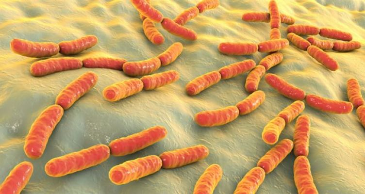 Ανακαλύφθηκαν 2.000 άγνωστα έως τώρα είδη βακτηρίων στο ανθρώπινο έντερο