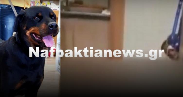 Νίκος Πλούμης: Ο κτηνίατρος που κάνει θαύματα και το ευχαριστώ (Βίντεο)