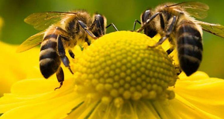 Κέντρο «Δήμητρα» Ι.Π. Μεσολογγίου: Τριήμερο Σεμινάριο Μελισσοκομίας