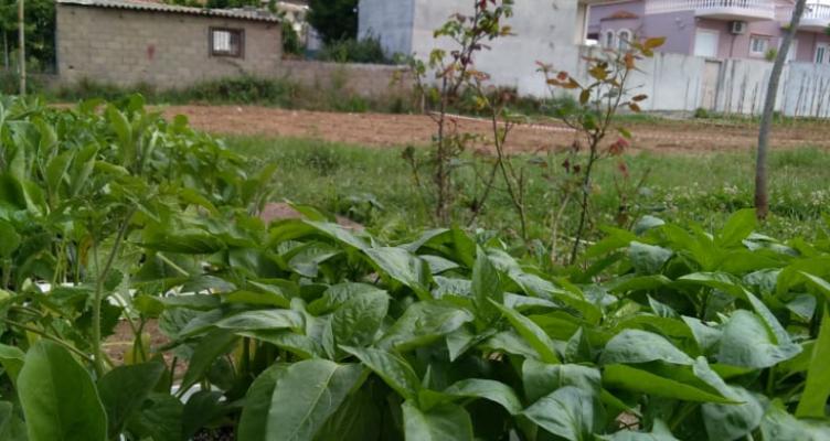 Για πέμπτη συνεχή χρονιά οι ανοιξιάτικες καλλιέργειες στο Δημοτικό Λαχανόκηπο του Δήμου Αγρινίου