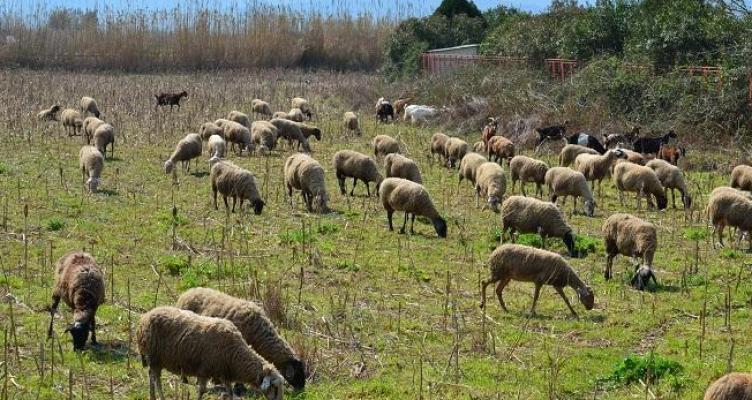 Ένωση Αγρινίου: Εξισωτική Αποζημίωση με 240 εκατ. ευρώ η Πρόσκληση