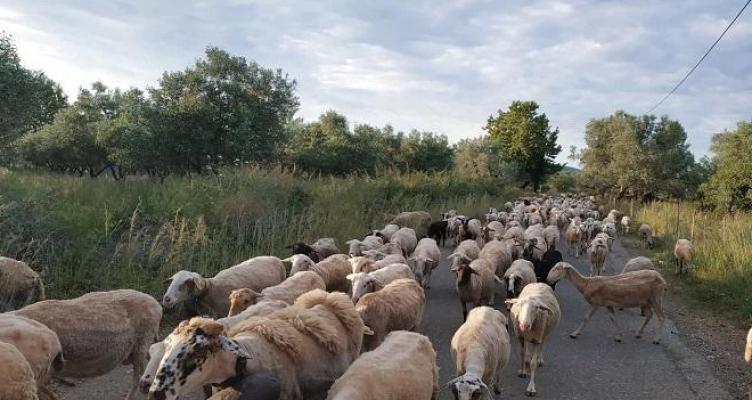 Ένωση Αγρινίου – Βιολογική Κτηνοτροφία: Ξεκίνησαν πληρωμές και στην Αιτωλοακαρνανία