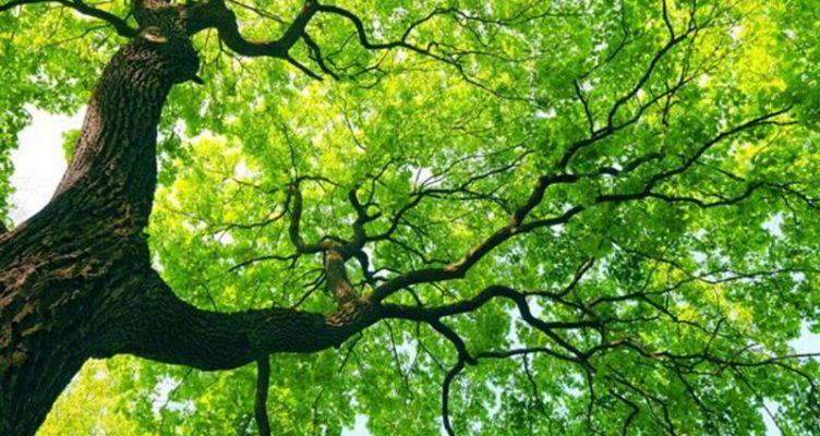 Ορισμένα δέντρα αλλάζουν φύλο – Πεθαίνουν πιο εύκολα όταν είναι θηλυκά