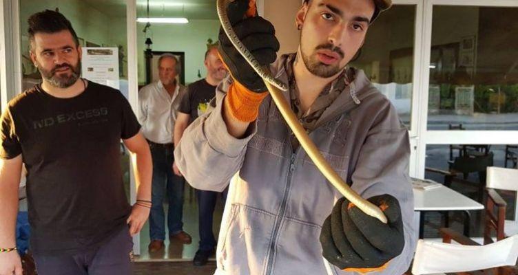 Φίδι σαΐτα από κήπο του Αγρινίου σε καφενείο της Αβόρανης