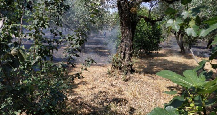 Ρουπακιάς Αγρινίου: Φωτιά έκαψε 8 στρέμματα ελιές (Φωτό)