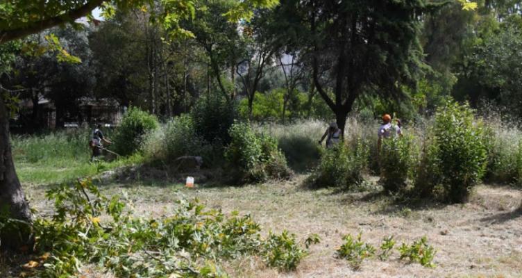 Δήμος Πατρέων: Κλάδεμα και καθαρισμός στον κήπο του Σκαγιοπουλείου