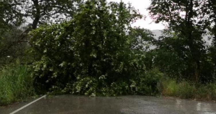 Ναυπακτία: Οι δυνατοί άνεμοι ξερίζωσαν πλατάνι στην Άνω Βασιλική (Βίντεο)