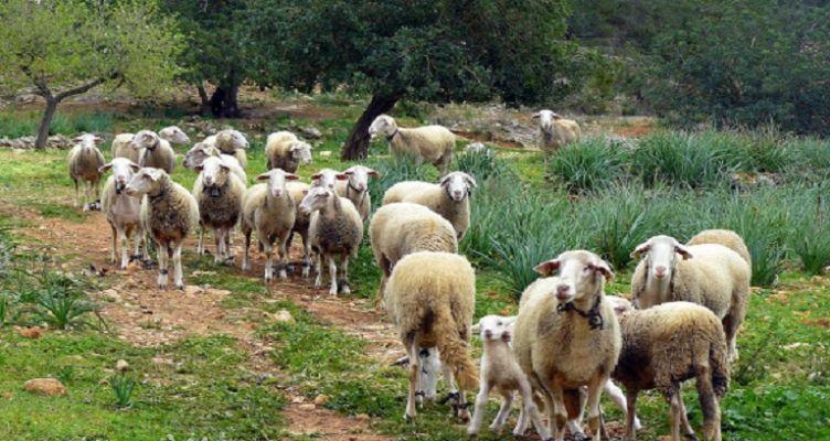 Ένωση Αγρινίου – Βιολογικά: Ανακοίνωση για τις πληρωμές
