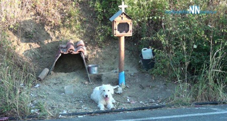 Ναυπακτία: Σκύλος βρήκε στέγη δίπλα στο εικόνισμα για το αφεντικό του (Βίντεο)