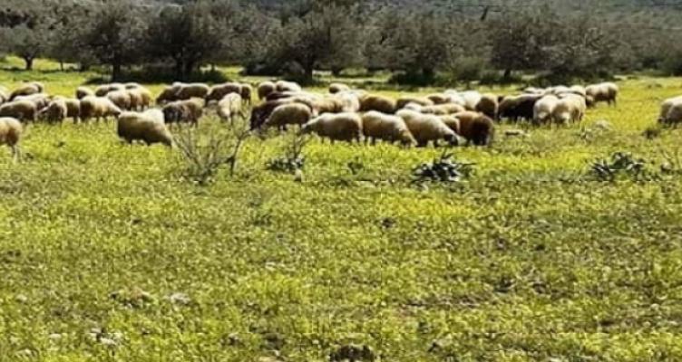 Ένωση Αγρινίου – Σπάνιες Φυλές: από 24 έως και 30 Ιουλίου οι ενστάσεις