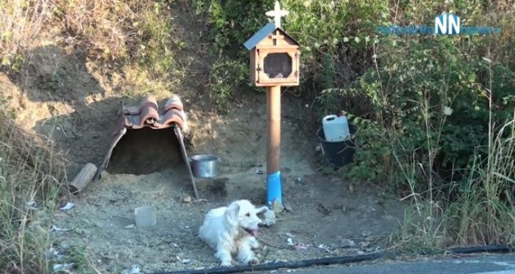 Είχε ιδιοκτήτη ο Xachiko της Ναυπακτία ή Blessed – Ζητά να τον επιστρέψουν (Βίντεο)