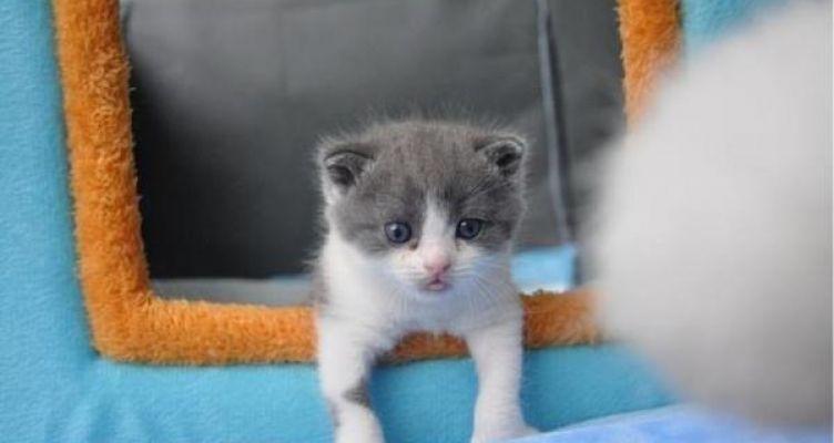 Η πρώτη γάτα κλωνοποιήθηκε – Ανοίγει ο δρόμος για τα πάντα