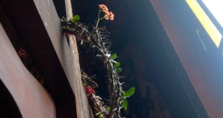 Άρτα: Άνθισε το ακάνθινο στεφάνι του Εσταυρωμένου σε Ιερό Ναό