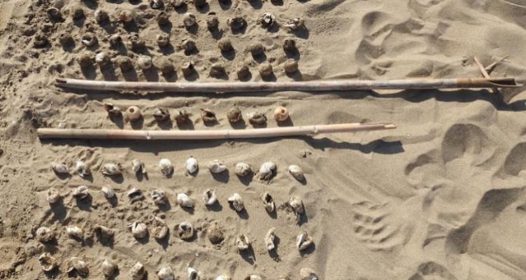 «Εκσκαφές φωλιών χελώνας Caretta Caretta από τον Φ.Δ./Λ.Μ.-Α.Ο. – Τα πρώτα χελωνάκια»