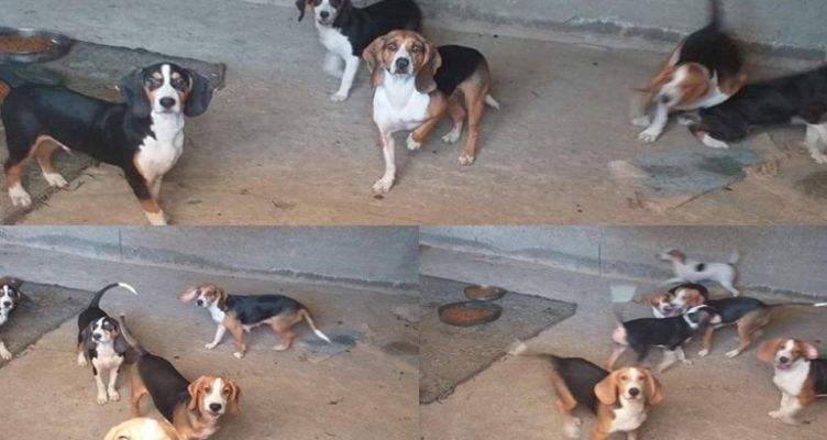 Ναύπακτος: Καταγγελία για κακοποίηση και παράνομη πώληση σκύλων