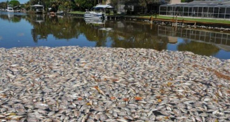 Αιτωλικό: Γέµισε νεκρά ψάρια η λιµνοθάλασσα