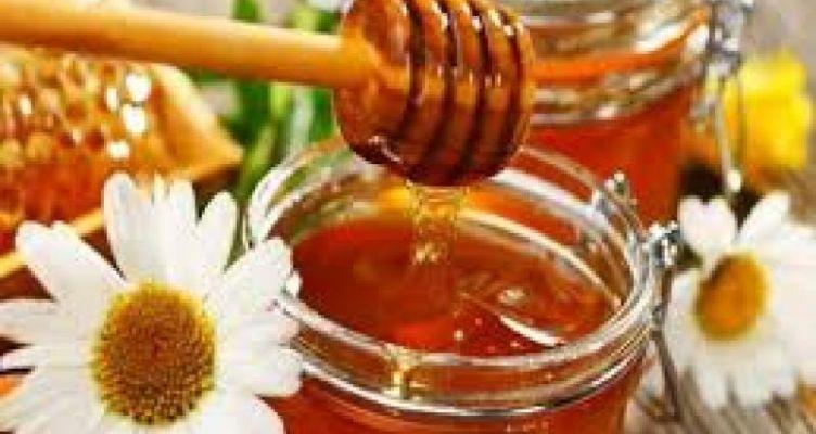 Ι.Ν. Αγίου Δημητρίου: Σεμινάριο Μελισσοκομίας στο Αγρίνιο