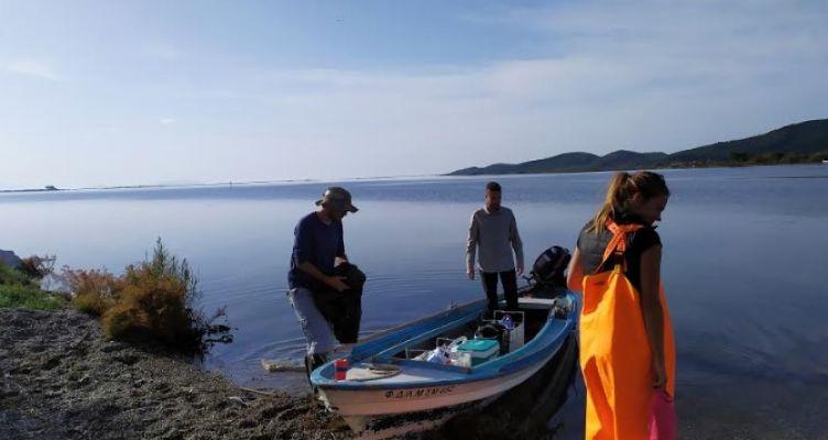 Παρατήρηση φαινομένου θνησιμότητας ιχθύων στη Λιμνοθάλασσα Αιτωλικού