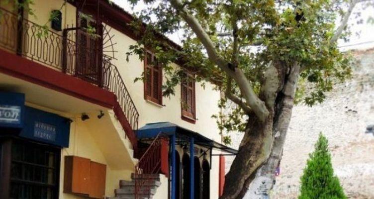 Πλάτανος ηλικίας …828 ετών στη Θεσσαλονίκη
