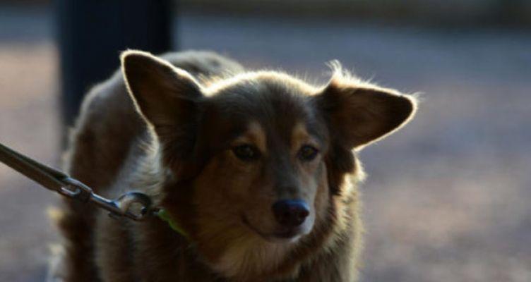 Ζάκυνθος: Καταδίκη για βασανισμό και κακοποίηση σκύλου – Τον έδεσε σε βαρέλι με αλυσίδα!