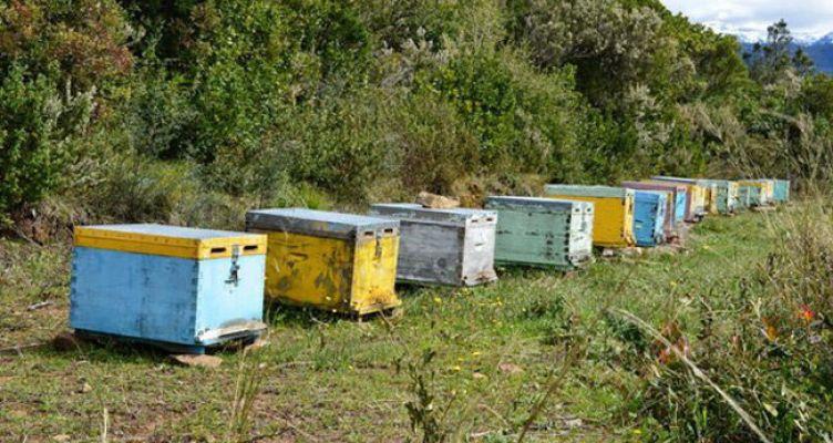 Π.Ε. Αιτωλοακαρνανίας: Προθεσμία δήλωσης διαχείμασης των μελισσών