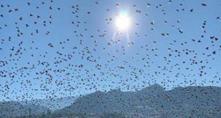 Το εντυπωσιακό θέαμα με τα πουλιά που μεταναστεύουν από το Ρίο (Βίντεο)