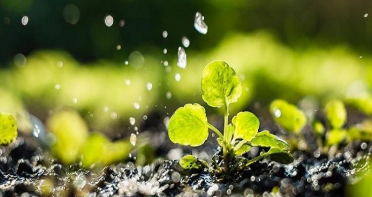 Διεθνές Έτος Υγείας των Φυτών το 2020