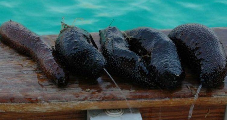 Μεγάλη ποσότητα ολοθούριων κατασχέθηκε σε σκάφος στην περιοχή του Αστακού