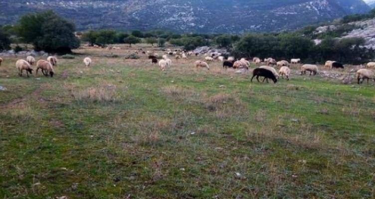 Εισόδημα των παραγωγών και τη βιωσιμότητα της κτηνοτροφίας στην Αιτωλ/νία