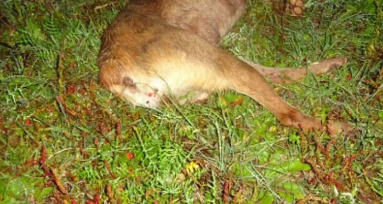 Παναιτώλιο: Σκύλος βρέθηκε νεκρός από βλήματα κυνηγητικού όπλου (Σκληρές εικόνες)