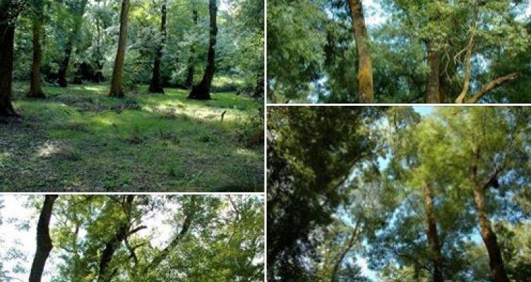 Απολαύστε ένα βίντεο από το δάσος του φράξου στο Τριχώνιο