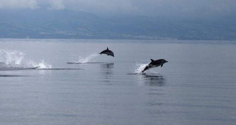 Ναύπακτος: Δελφίνια στην Ψανή μάγεψαν τον κόσμο (Βίντεο)