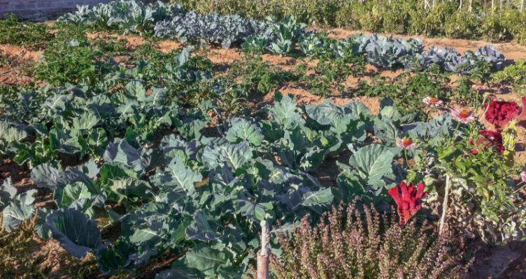 Αγρίνιο: Έναρξη ανοιξιάτικων καλλιεργειών στον Δημοτικό Λαχανόκηπο (Φωτό)