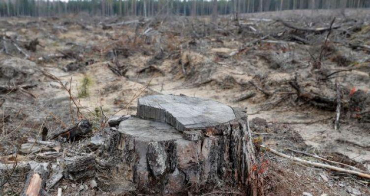 Καμπανάκι από επιστήμονες: Η καταστροφή της φύσης θα φέρει νέες πανδημίες