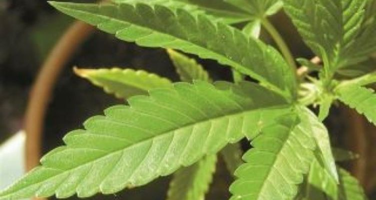 Μεσολόγγι: Άνδρας πιάστηκε με ναρκωτικά στο αγρόκτημα και στο σπίτι του