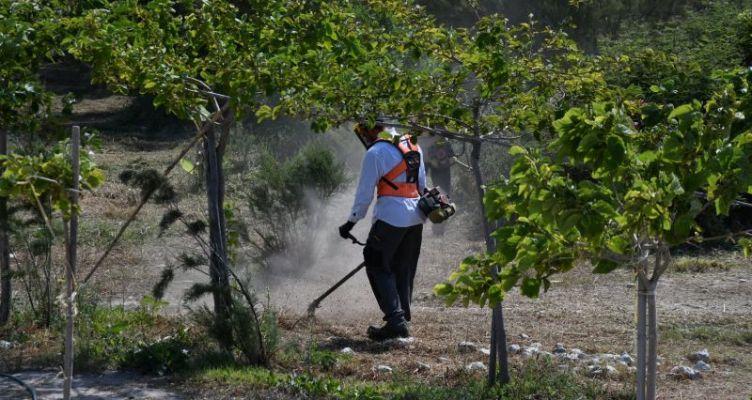 Πάτρα: Eργασίες καθαρισμού και διαμόρφωσης στο Παλατανόδασος