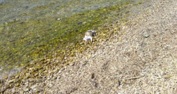 Αστακός Ξηρομέρου: Μια νεκρή γάτα ξεβράστηκε