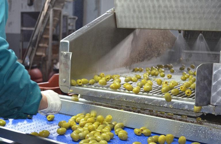 Ξεκίνησαν οι παραλαβές βρώσιμης ελιάς. Η Ένωση Αγρινίου  έτοιμη να απορροφήσει το σύνολο της παραγωγής
