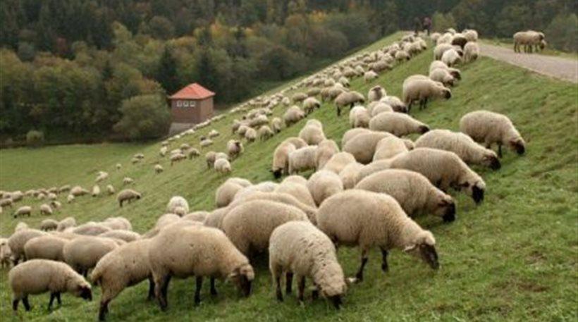Η φωνή του αγρότη: Προστατέψτε το κοπάδι και το εισόδημά σας