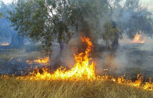 Φωτιά κατέστρεψε κάδους ελαιών στο Νεοχώρι