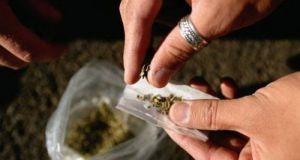 Συνελήφθη 57χρονος στη Γαστούνη για καλλιέργεια και κατοχή ναρκωτικών