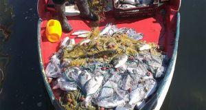 Εκατοντάδες κιλά τσιπούρας γεμίζουν τα δίχτυα Ανατολικά του Αμβρακικού