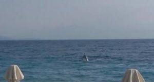 Δελφίνια έφθασαν στα… ρηχά και «τρέλαναν» τους λουόμενους (Βίντεο)