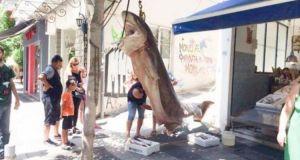 Οι ψαράδες που έπιασαν έναν καρχαρία 300 κιλών στην Κεφαλονιά…