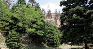 Σωκράτης Φάμελλος: Η πρώτη ανάρτηση των δασικών χαρτών ολοκληρώνεται