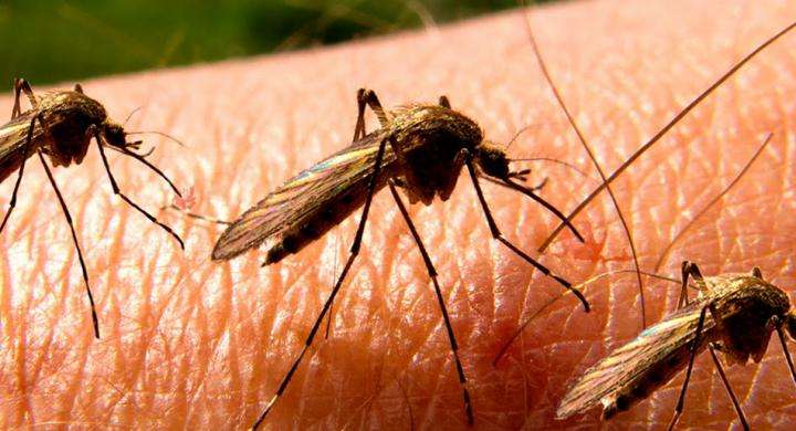Πώς τα κουνούπια άλλαξαν τον κόσμο και συνεχίζουν να το κάνουν
