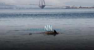 Ναύπακτος: Νεκρό δελφίνι στην Παλαιοπαναγιά (Φωτογραφίες – Βίντεο)