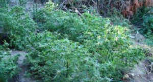 Ιωάννινα: Εξαρθρώθηκε σπείρα που καλλιεργούσε ναρκωτικά